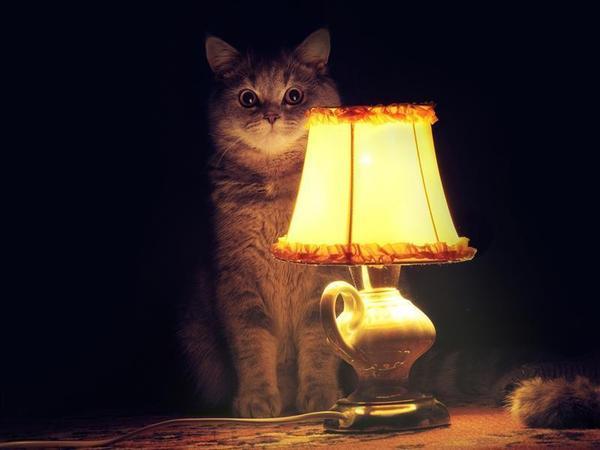 кот с лампой.jpg