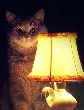 Кот_003.jpg
